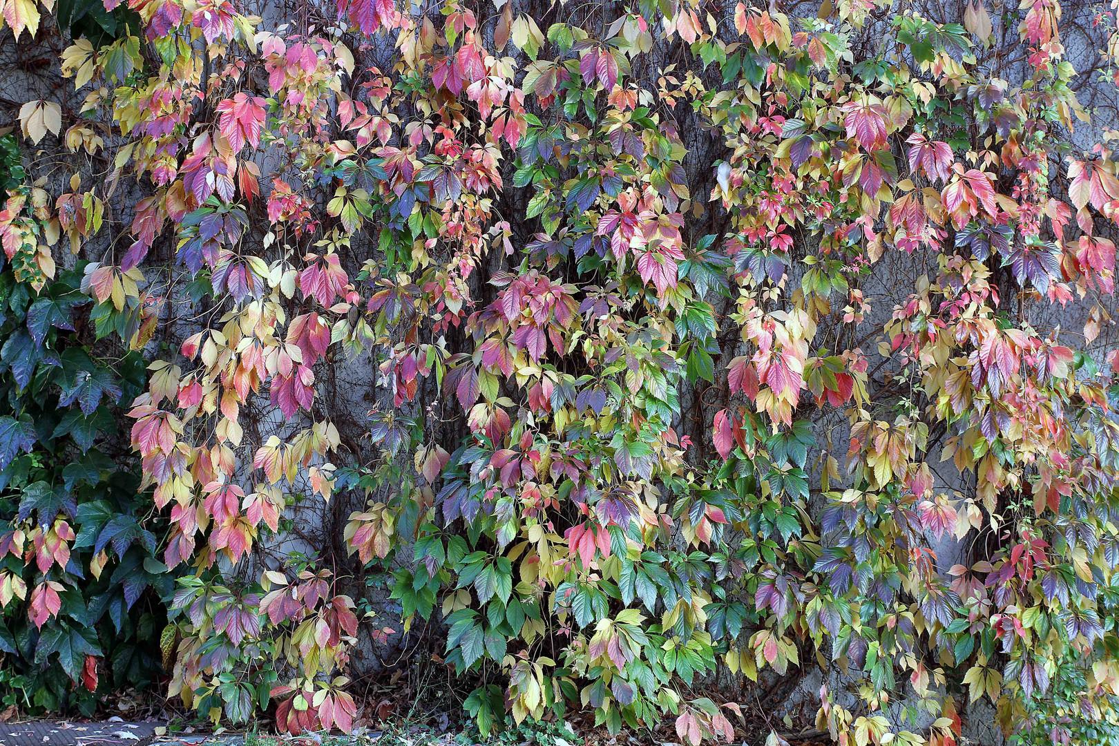 Farbenprächtiges Herbstlaub