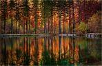 Farbenspiegelung im Herbst