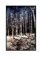 Farbenspiel am Wald