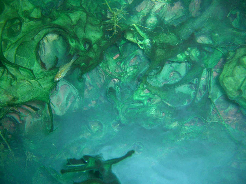 Farbenspiel der Algen mit Fisch