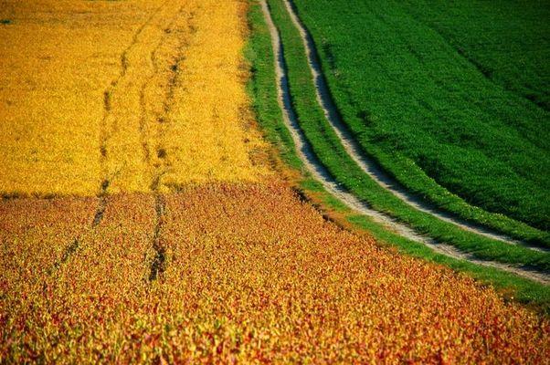 Farbenspiel der Landwirte...