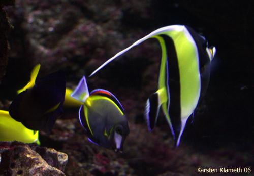 Farbenspiel unter Wasser