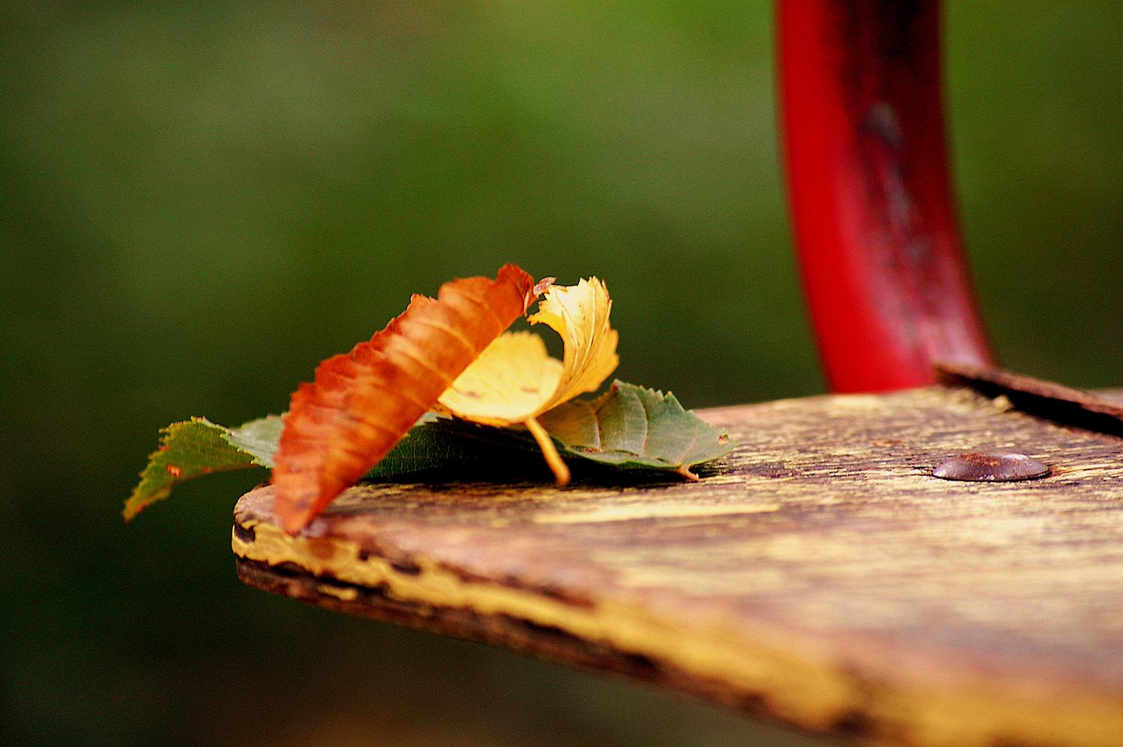 Farbentanz im Herbstwald