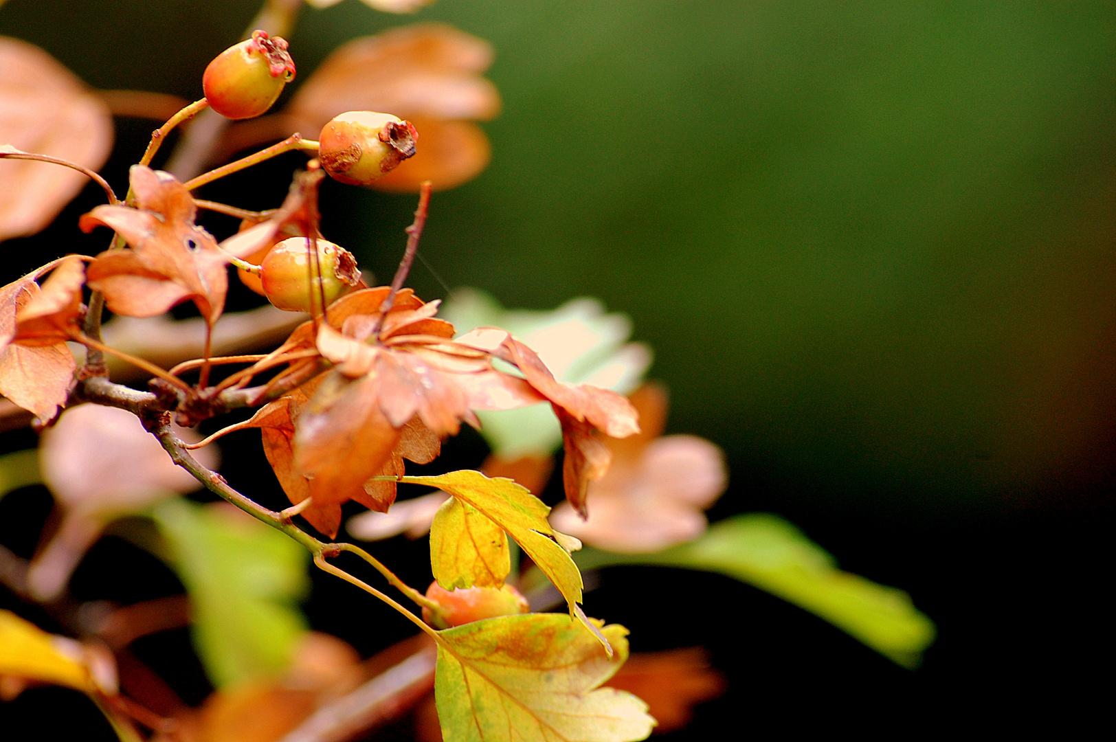 Farbentanz im Herbstwald (2)