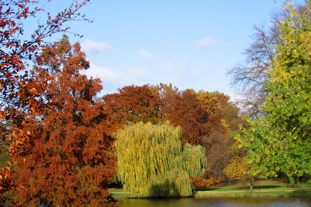 Farbenvielfalt im Herbst