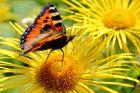 Farbexplosion Schmetterling