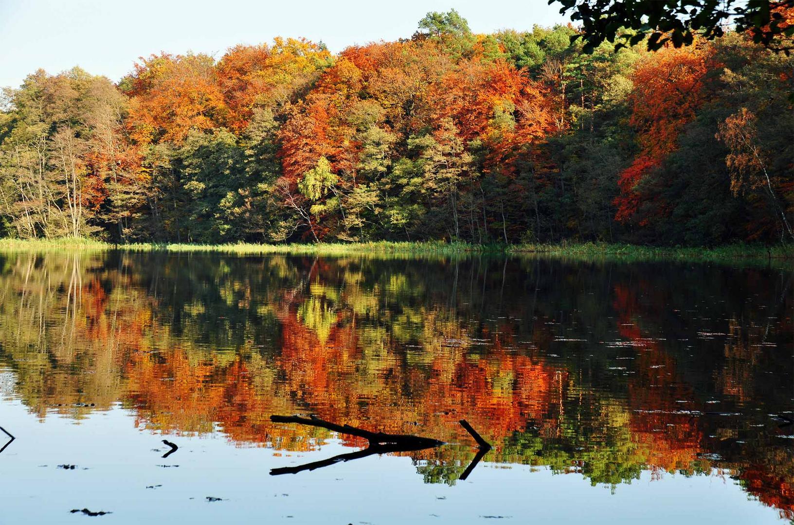 Farbige Welten im Herbst