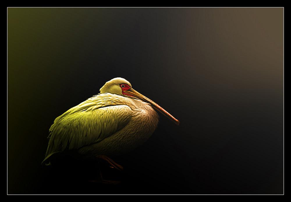 Farbiger Pelikan