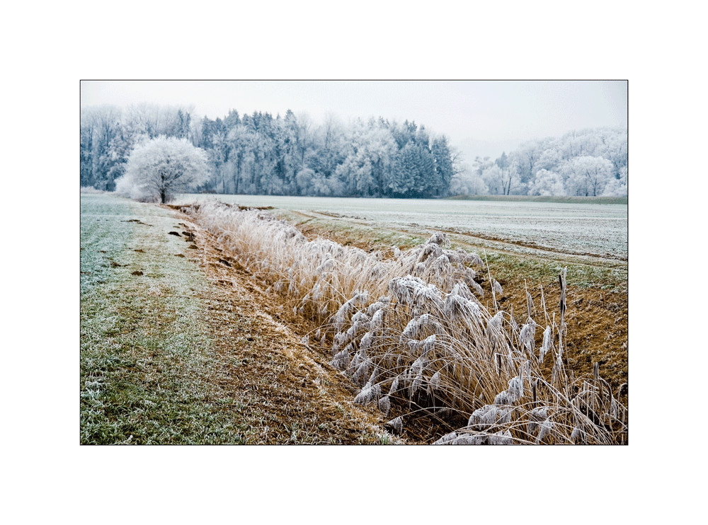 farbiger winter