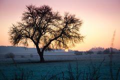 farbiges Morgenerwachen