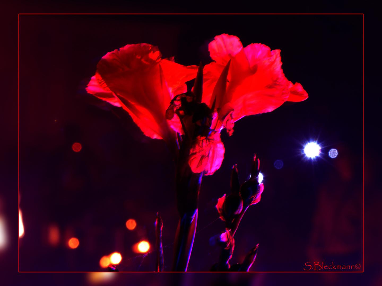 Farbspiel der Blüte