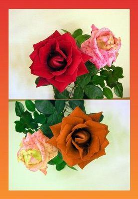 Farbspielerei mit zwei Rosen