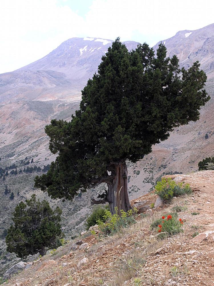Farbtupfer im Taurusgebirge