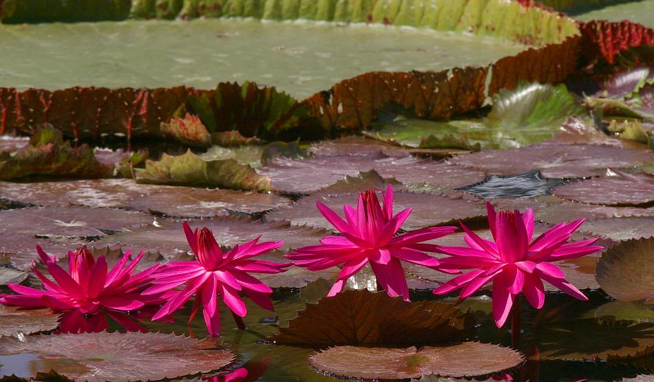 Farbtupfer pink