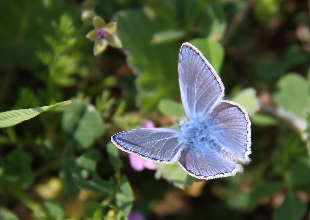 Farfalla 2/2009