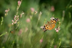 Farfalla #53