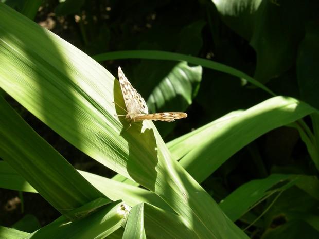 Farfalla al sole