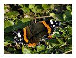Farfalla di sogno
