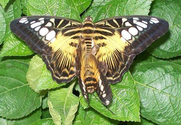 Farfalle in amore...