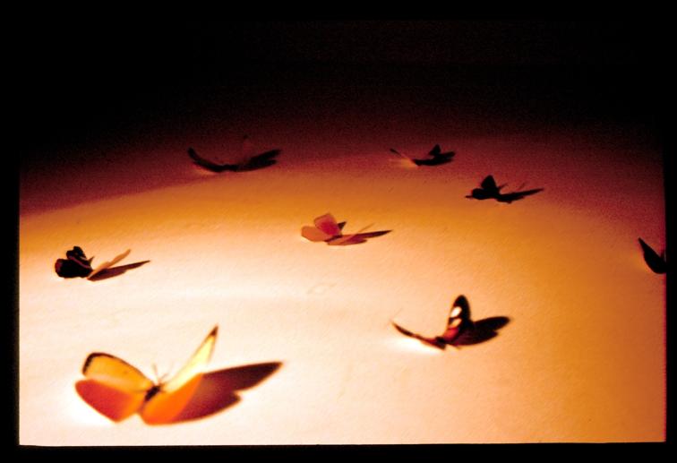Farfalle in cameretta