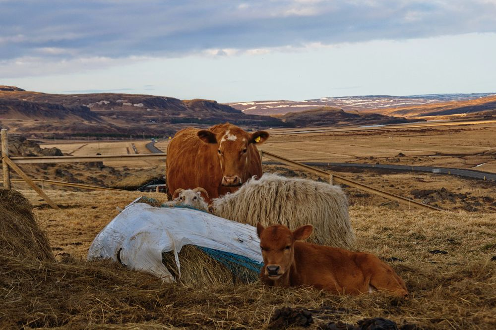 Farm-Romatik