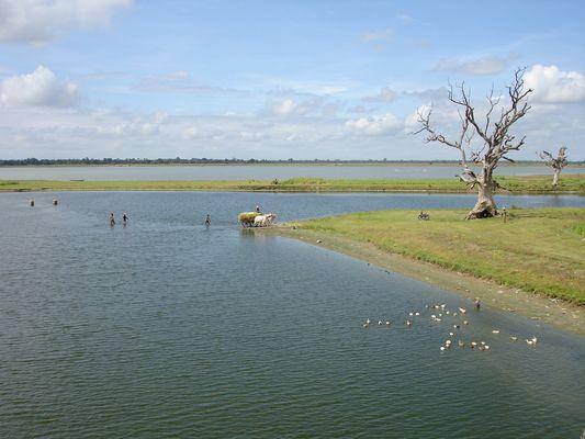 Farmers crossing lakes outside Mandalay