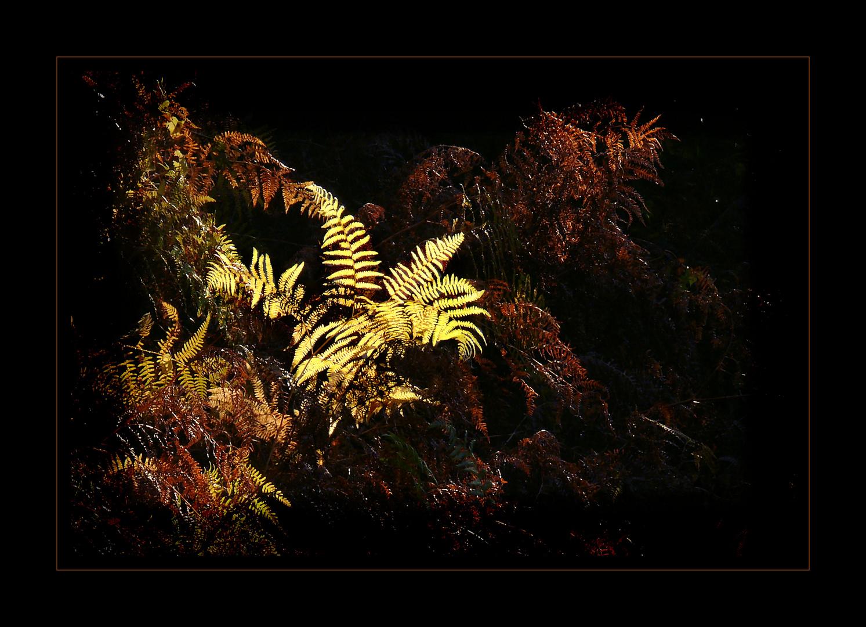 Farn im Unterholz
