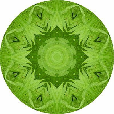 Farn Kaleidoskop