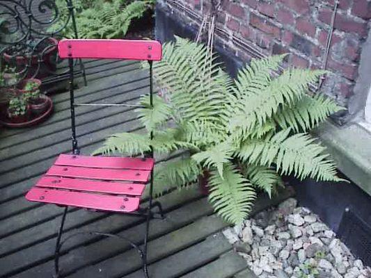 farn oder sitzen ?