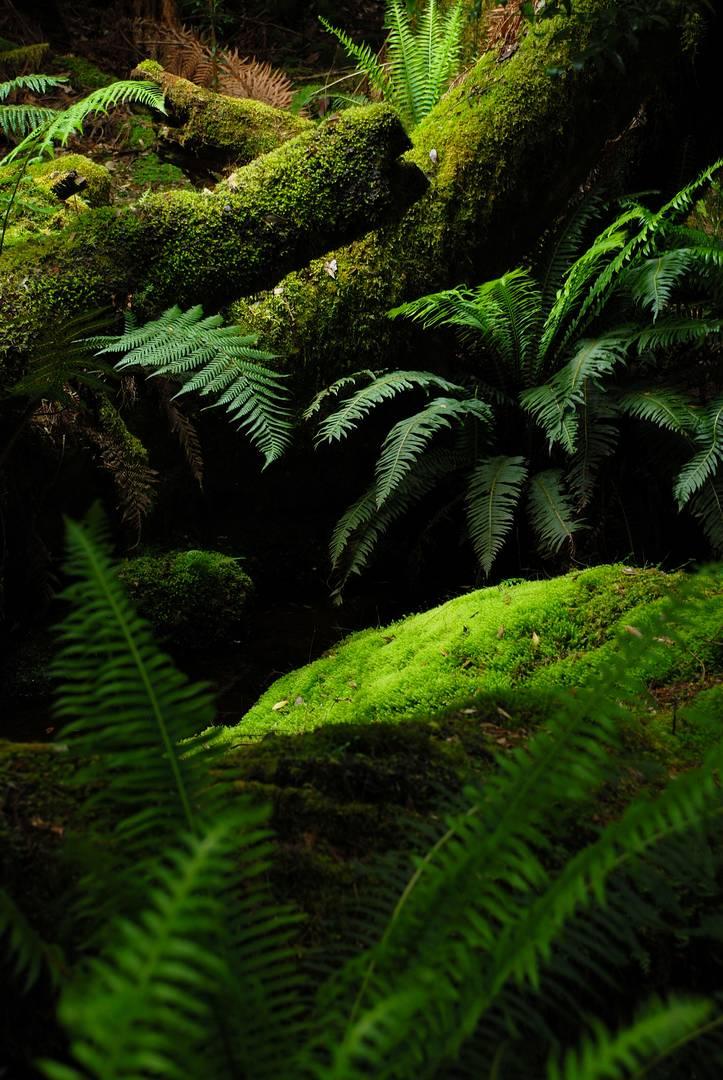 Farn- und Moosland Tasmanien