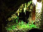 Farne in einer Höhle
