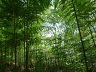 Farnkrautwald im Sommer.