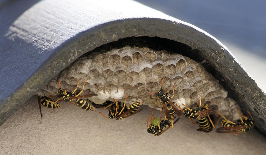 Fast so fleissig wie die Bienen..