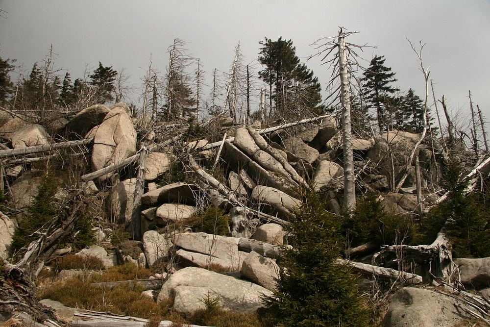 fast toter Wald mit Granitblockwerk