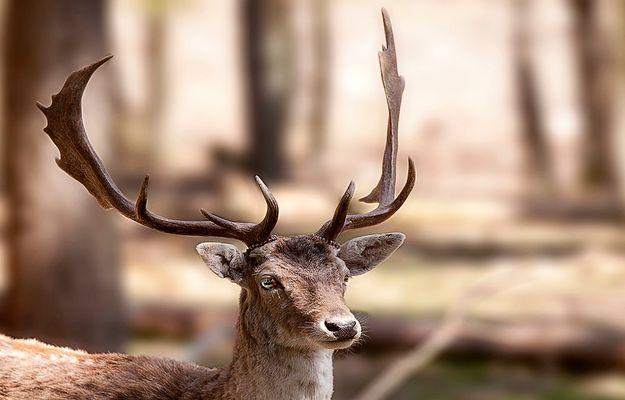 Fast Wildlife !!