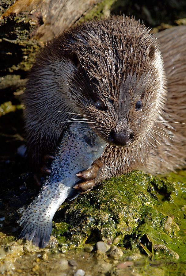 Fastenzeit, Fischzeit?