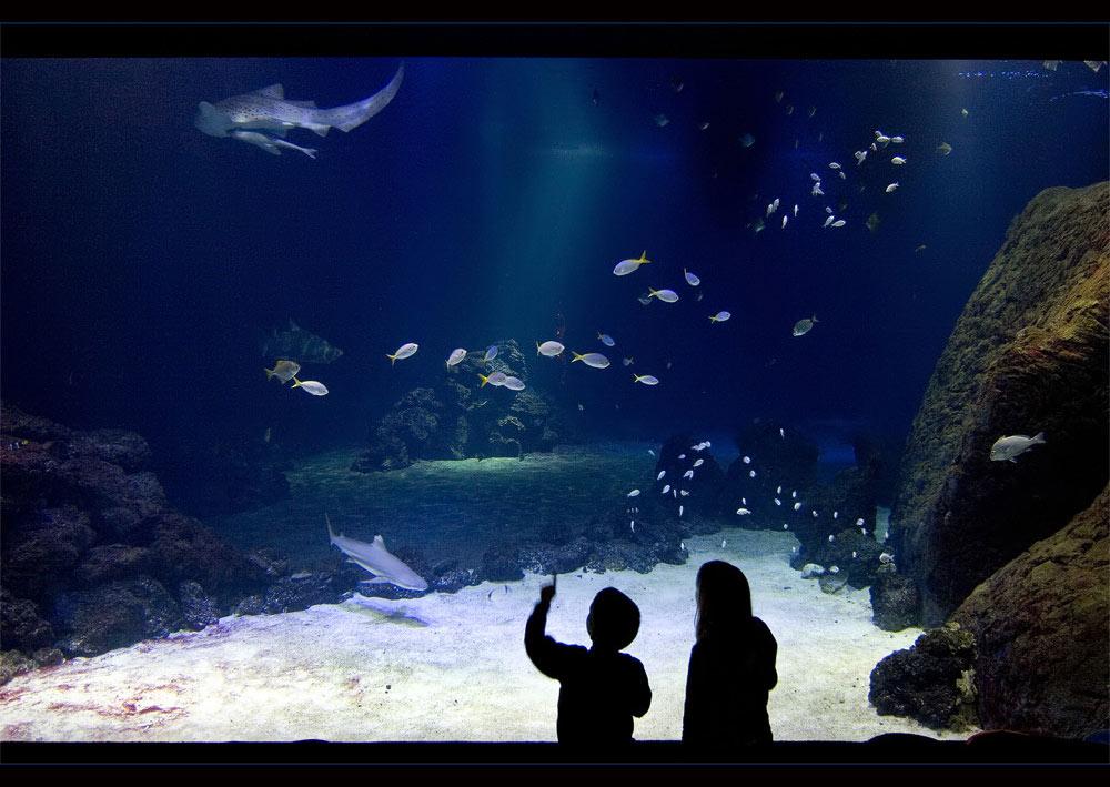 Faszination Aquarium II