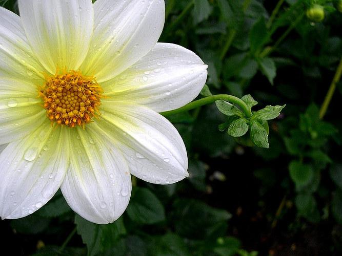 Faszination: Blume