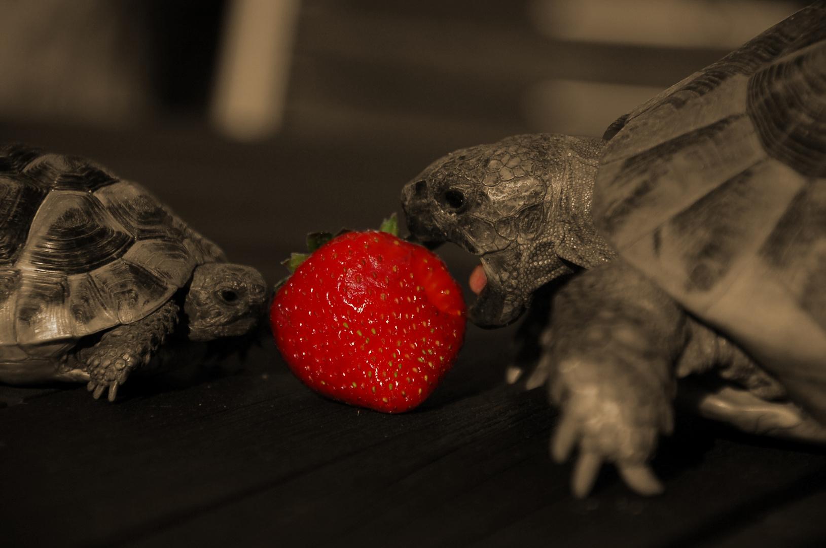 Faszination Erdbeere