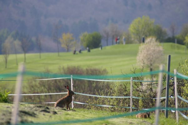 Faszination Golfsport.