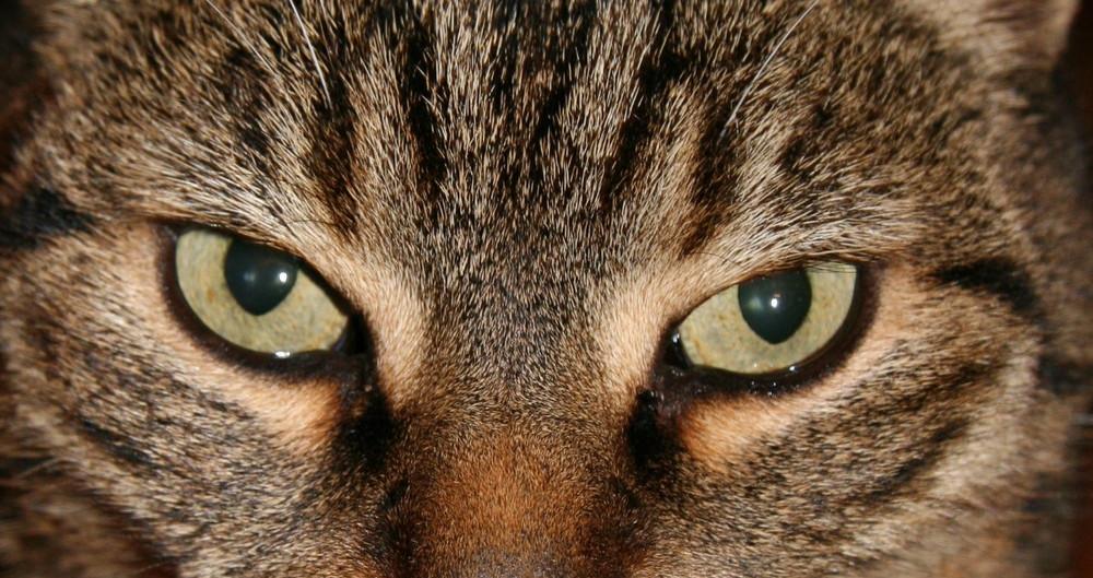 Faszination Katzenaugen...