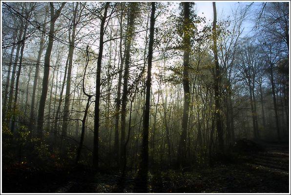"- Faszination ""Mystic Wald"" -"