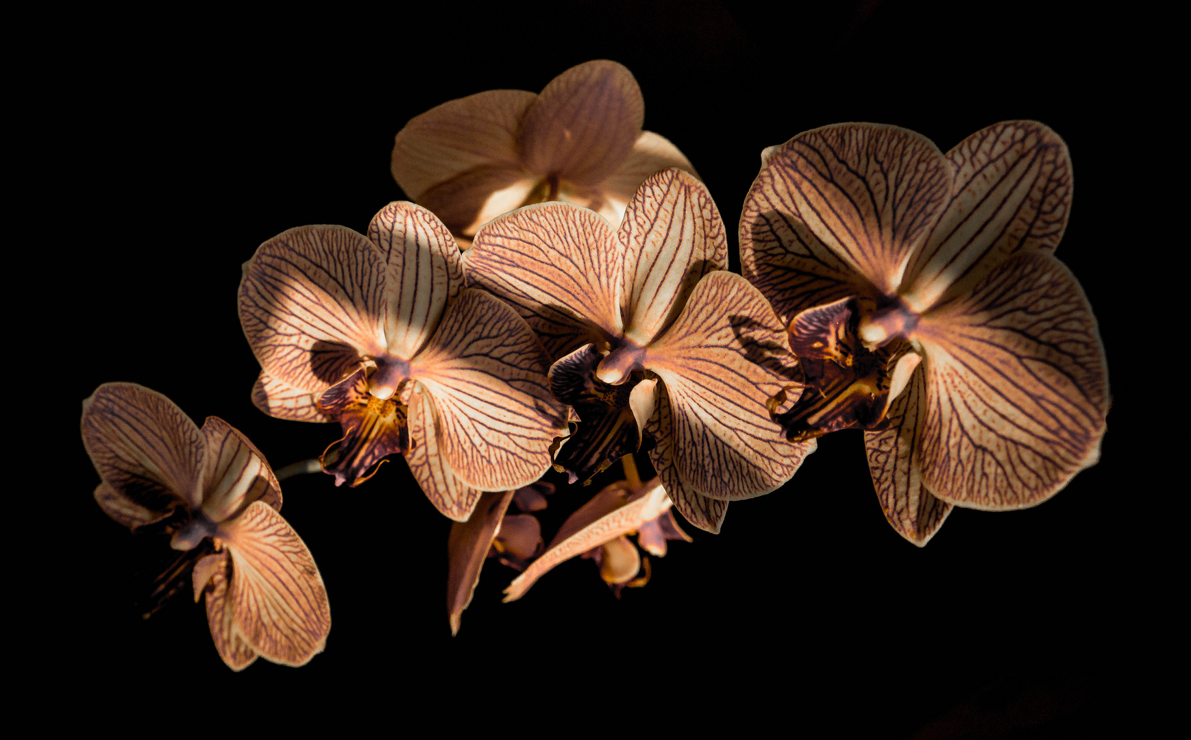 Faszination Orchidee 1