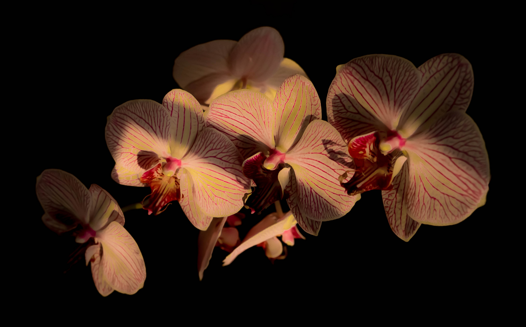 Faszination Orchidee 2