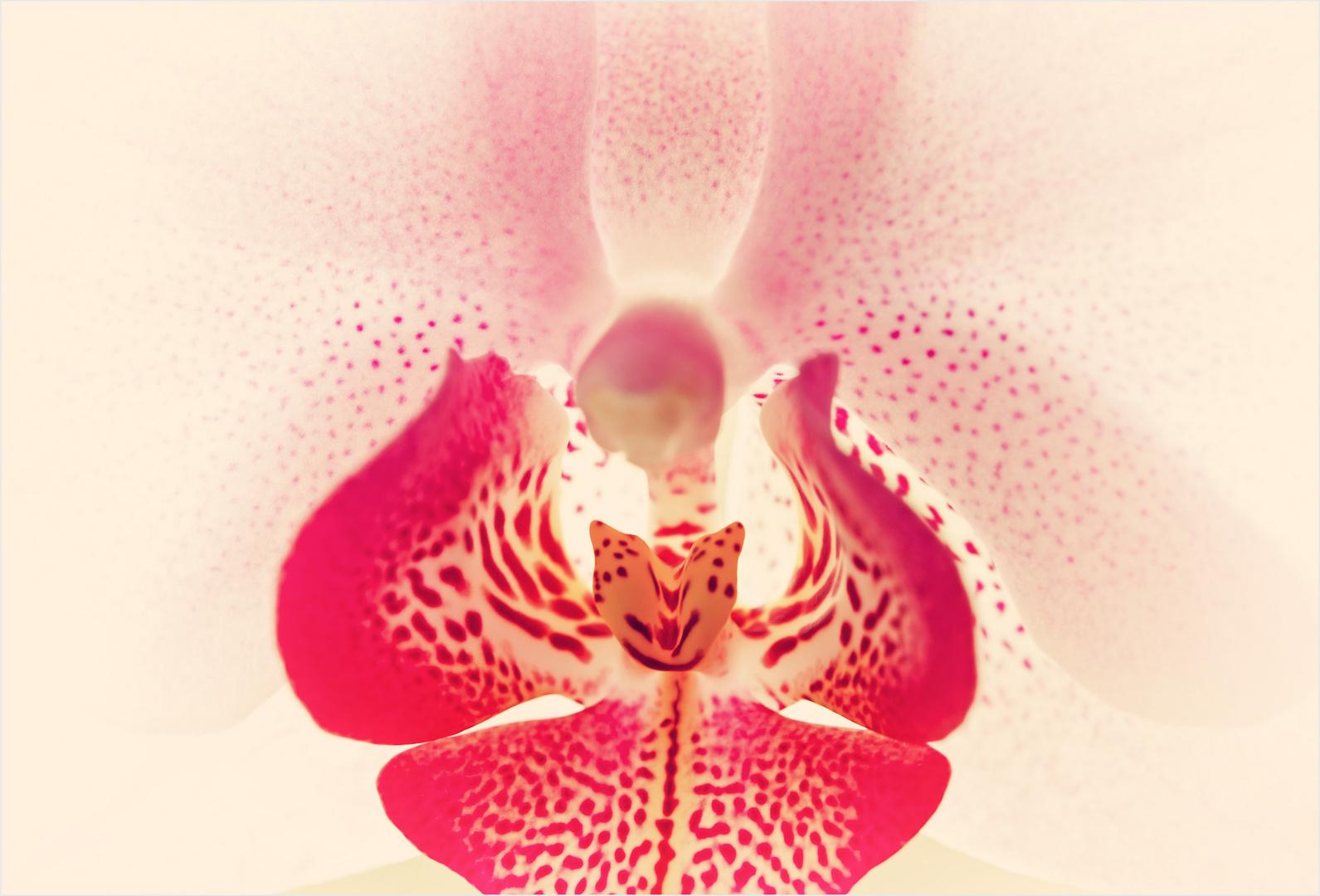 Faszination Orchidee