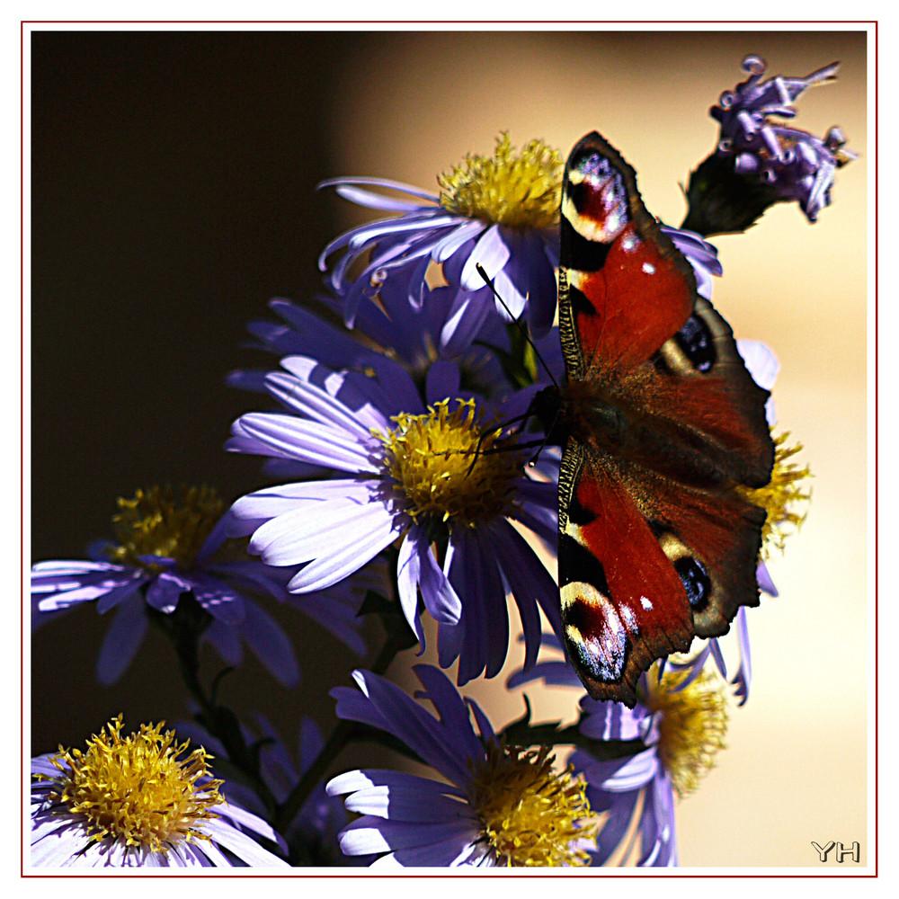 Faszination Schmetterling..