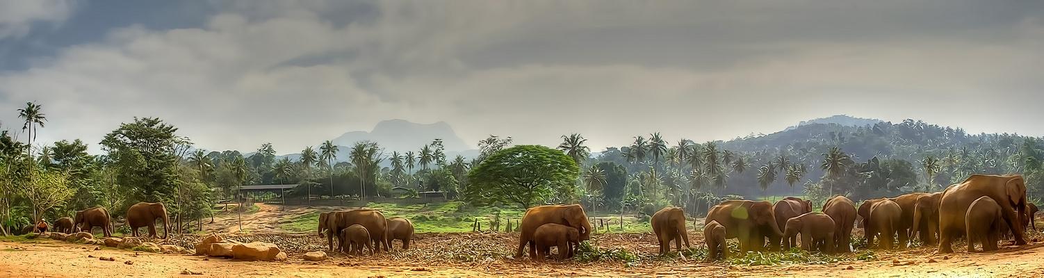 Faszination Sri Lanka