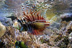 Faszination unter Wasser