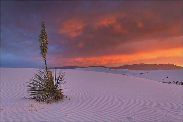 Faszination White Sands