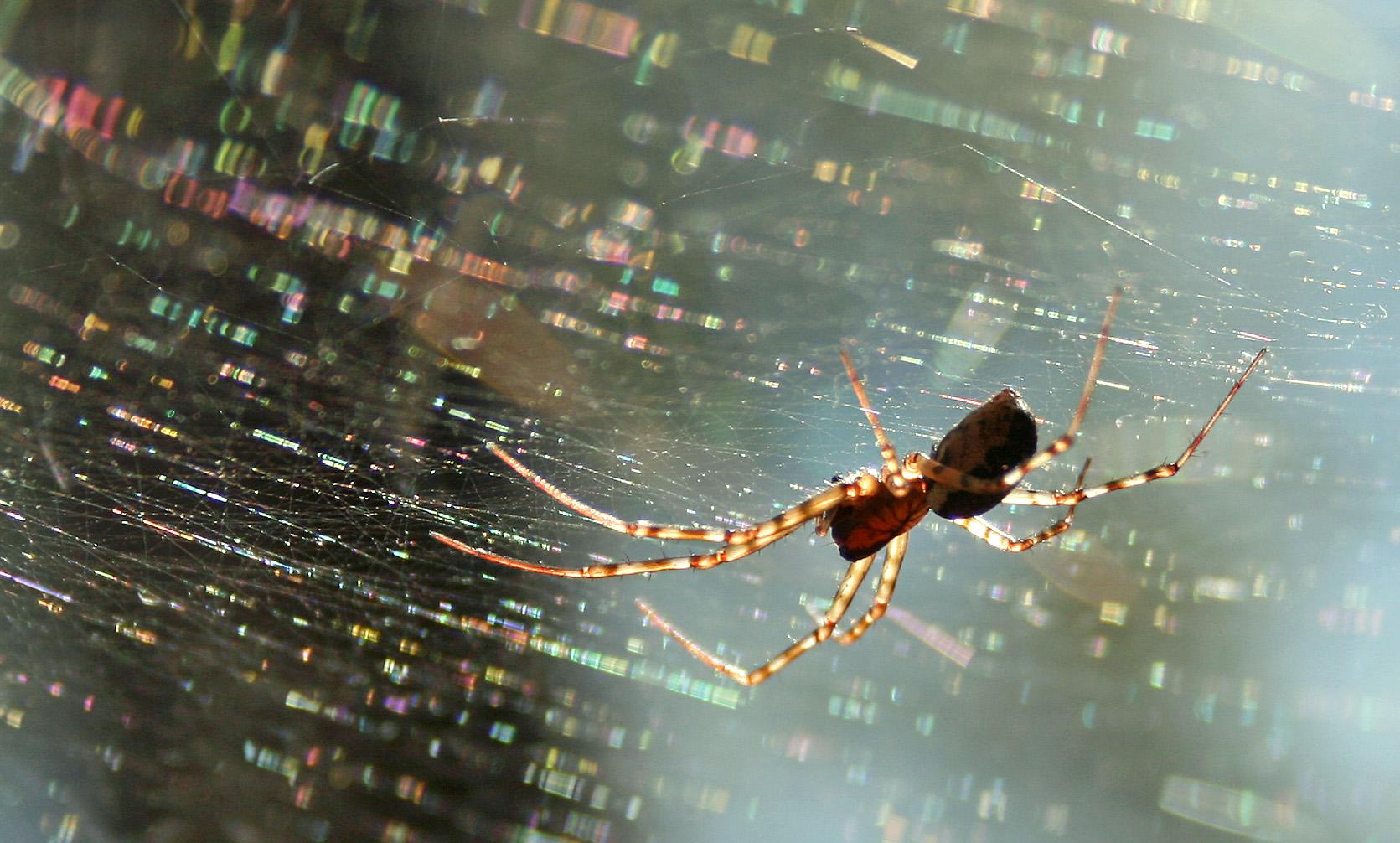 Faszinierend - trotz Spinnenphobie